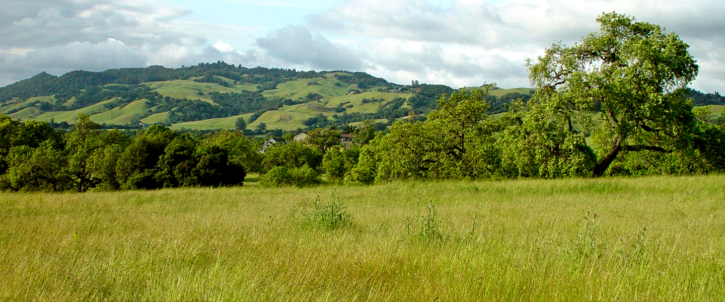 Mountains over a grassy field.